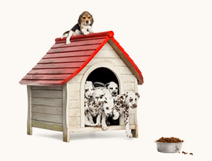 several dogs in a doghouse